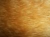 picats3141
