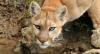 zen_lioness